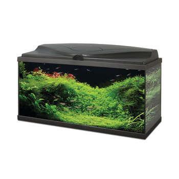 Achat Meubles Aquariums Eau Douce Mer Jardinerie Truffaut Quimper